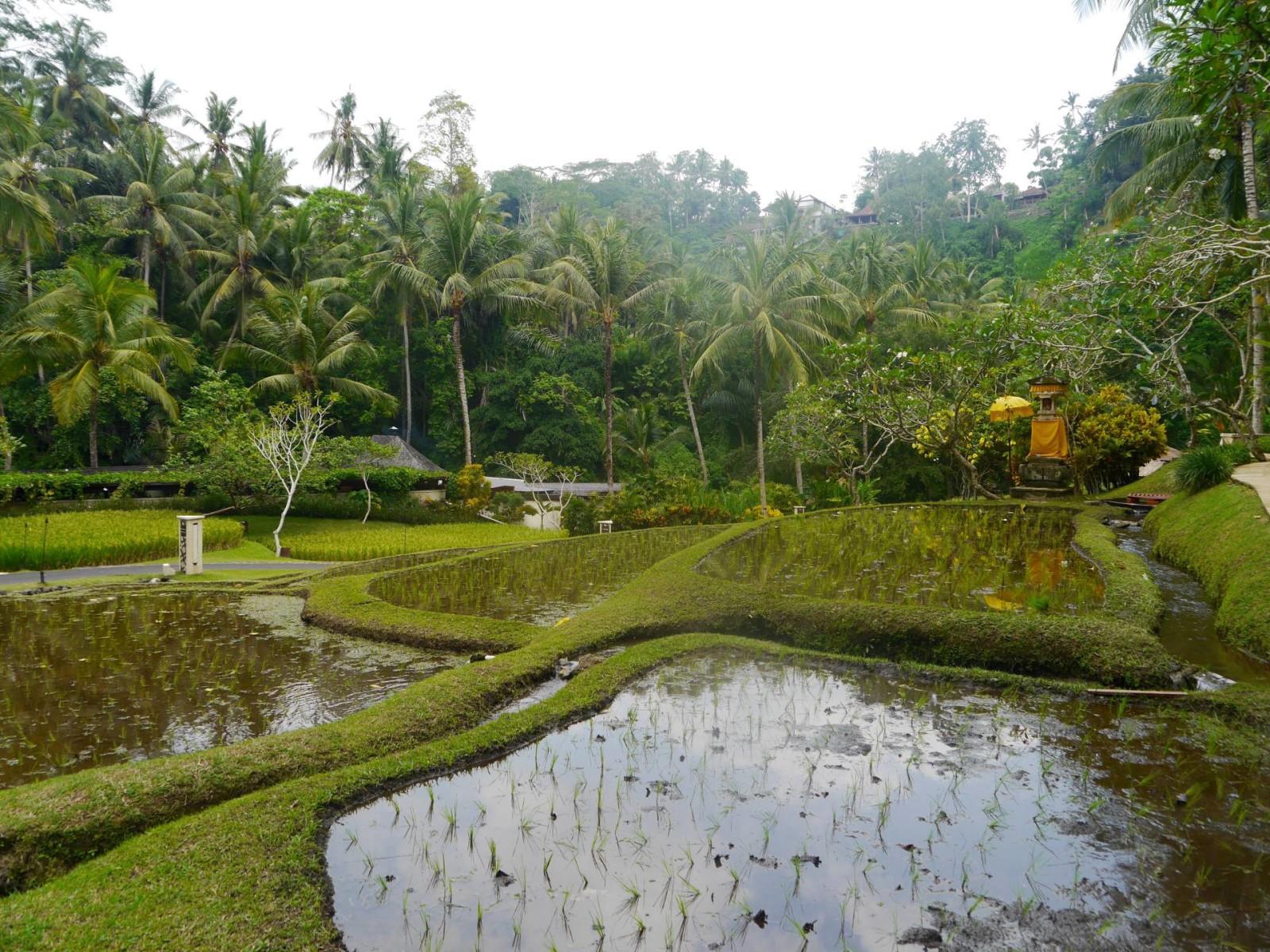 four-seasons-sayan-ubud-bali-7
