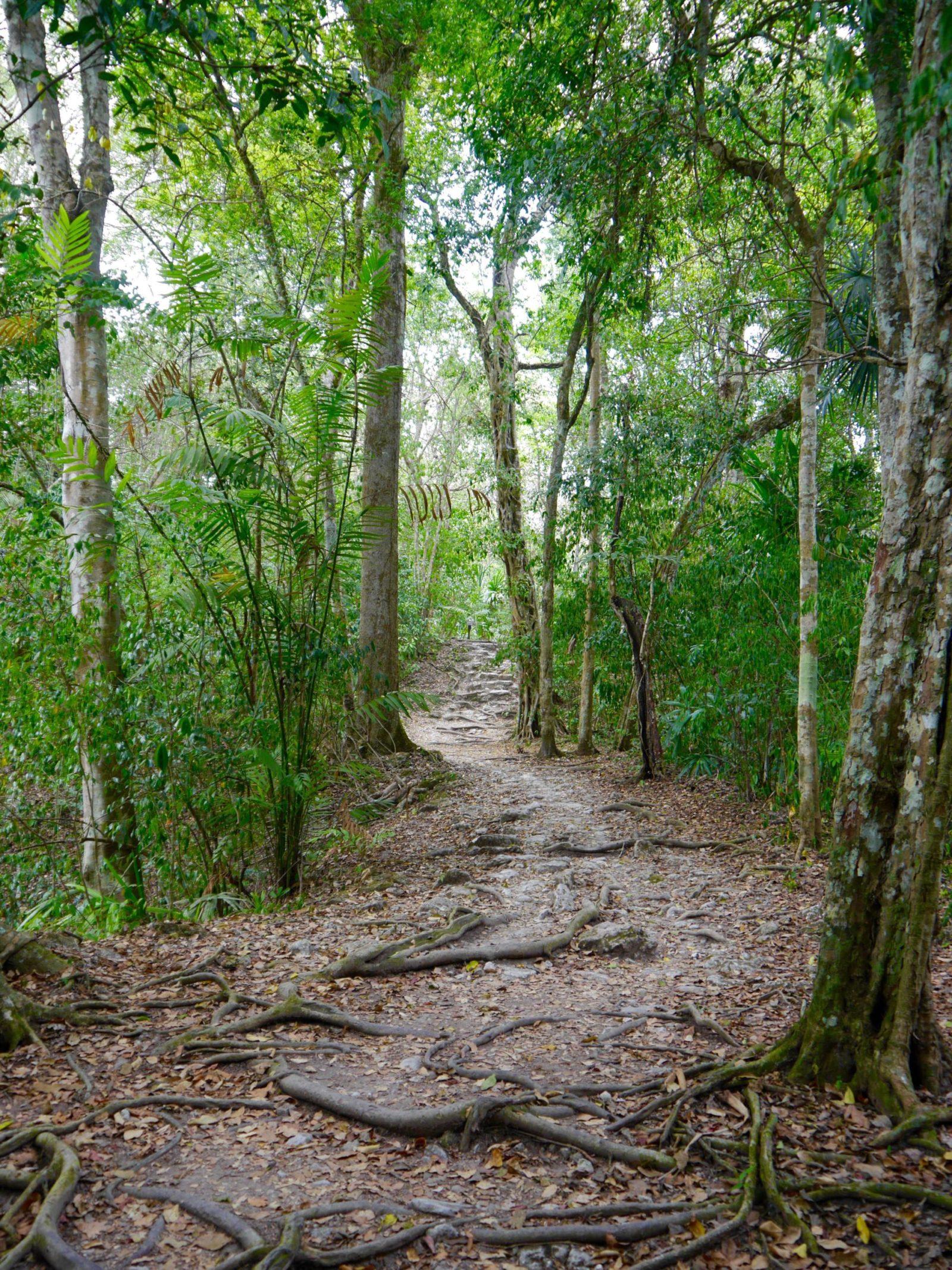 tikal-guatemala-jungle