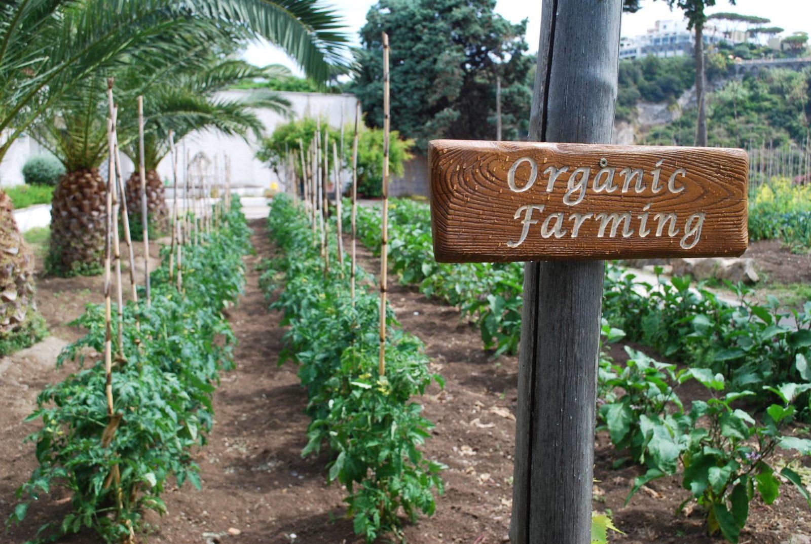 garden-villas-resport-ischia4