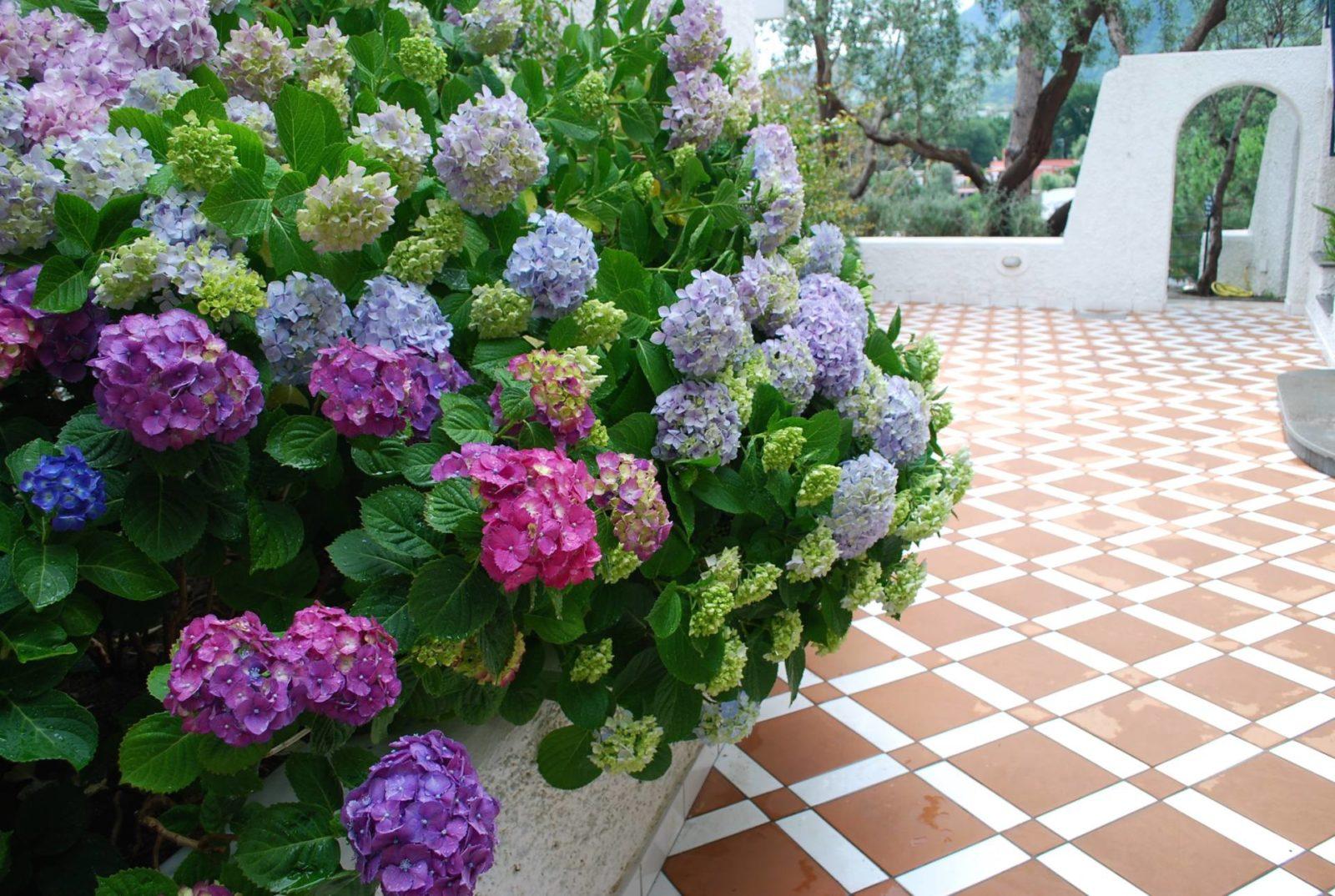 garden-villas-resport-ischia5