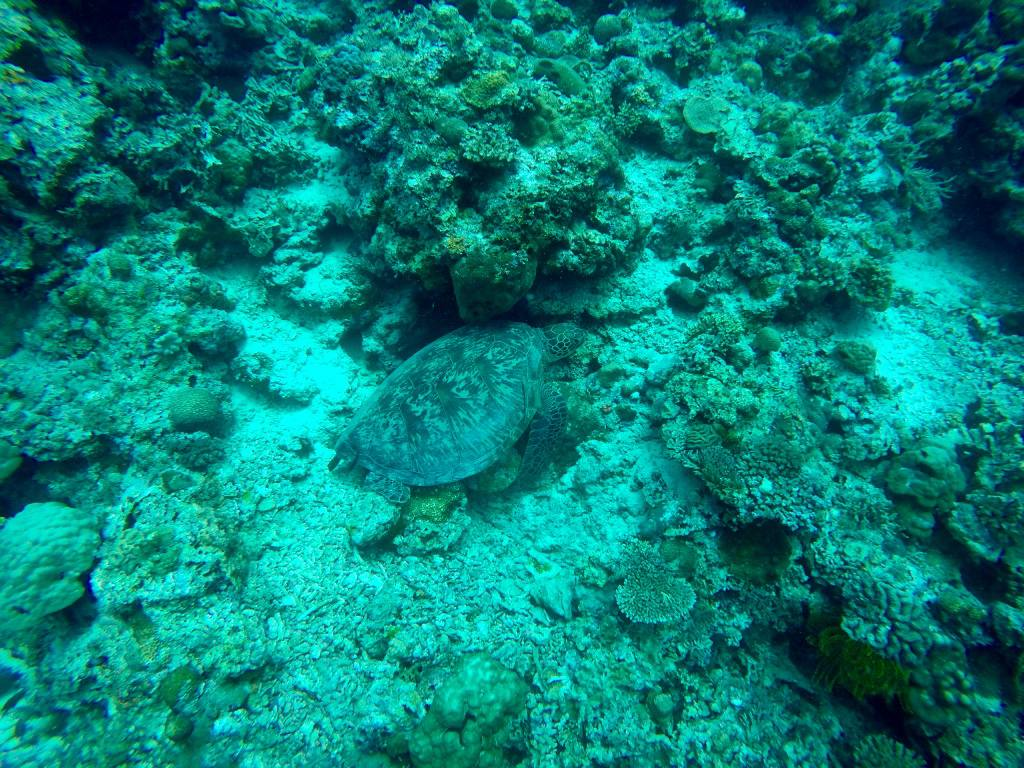 scuba-diving-sea-turtle-moalboal-philippines