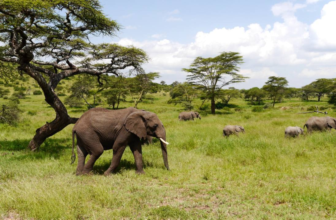 elephants-safari-serengeti-tanzania