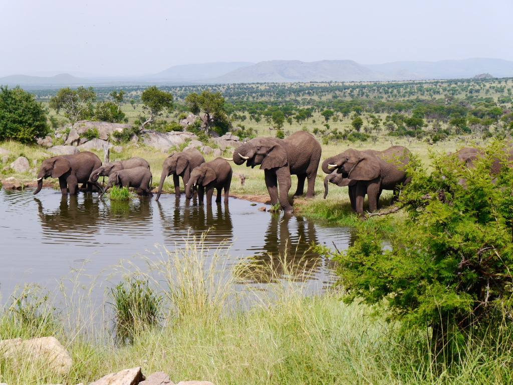 four-seasons-serengeti-elephants-watering-hole