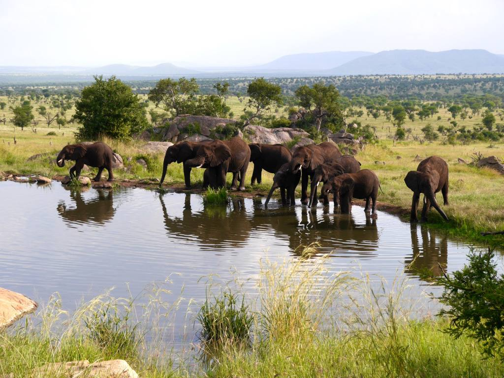 four-seasons-serengeti-tanzania-elephants