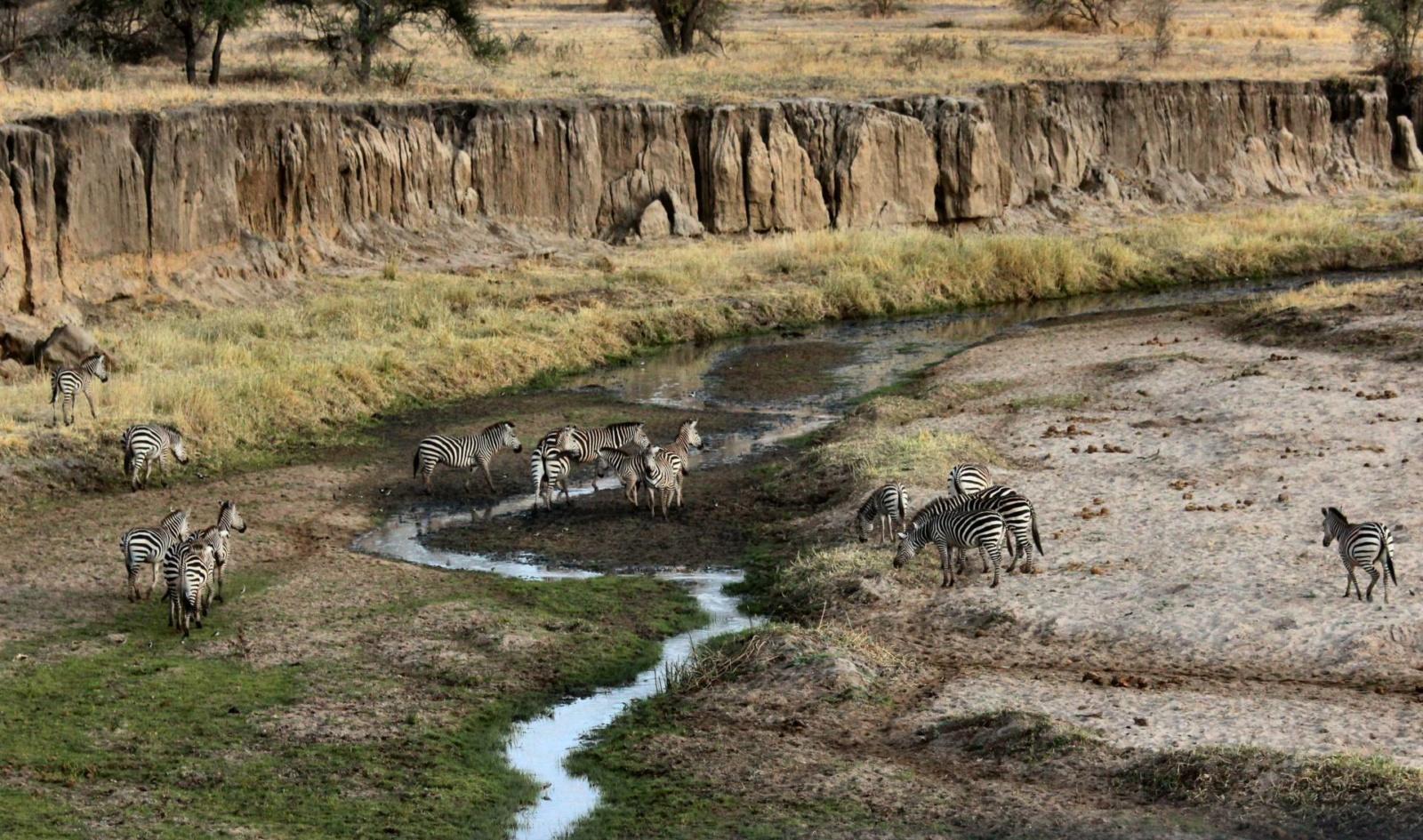 zebras-africa-safari