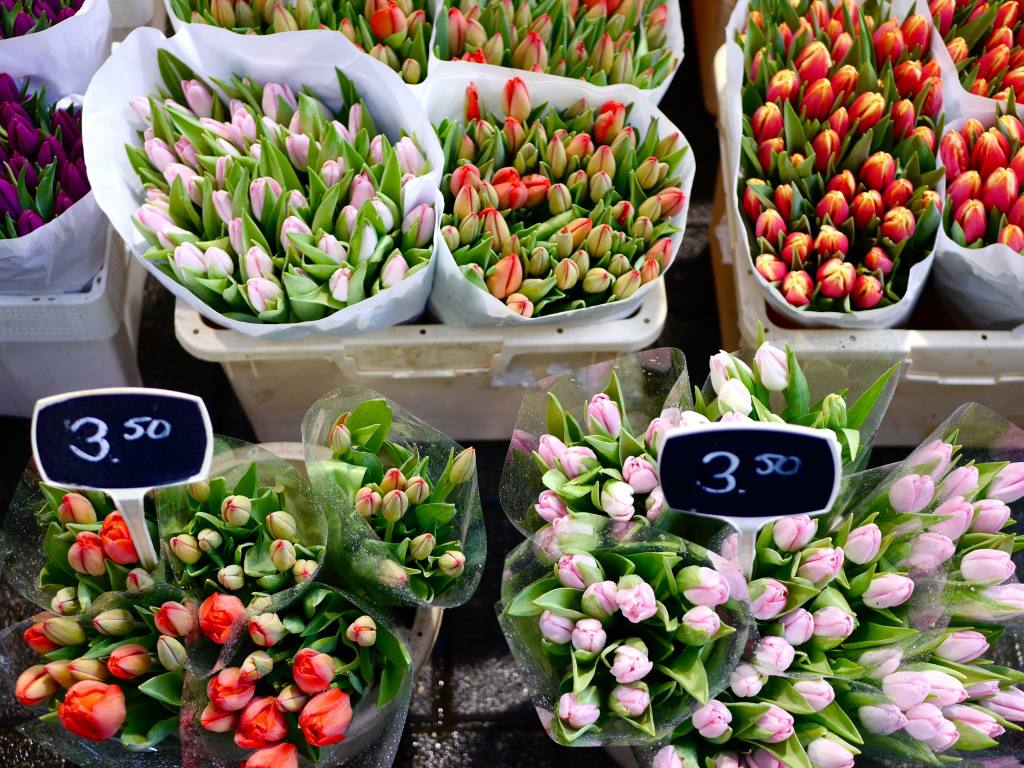 Colourful tulips at Amsterdam's Bloemenmarkt, the world famous floating flower market