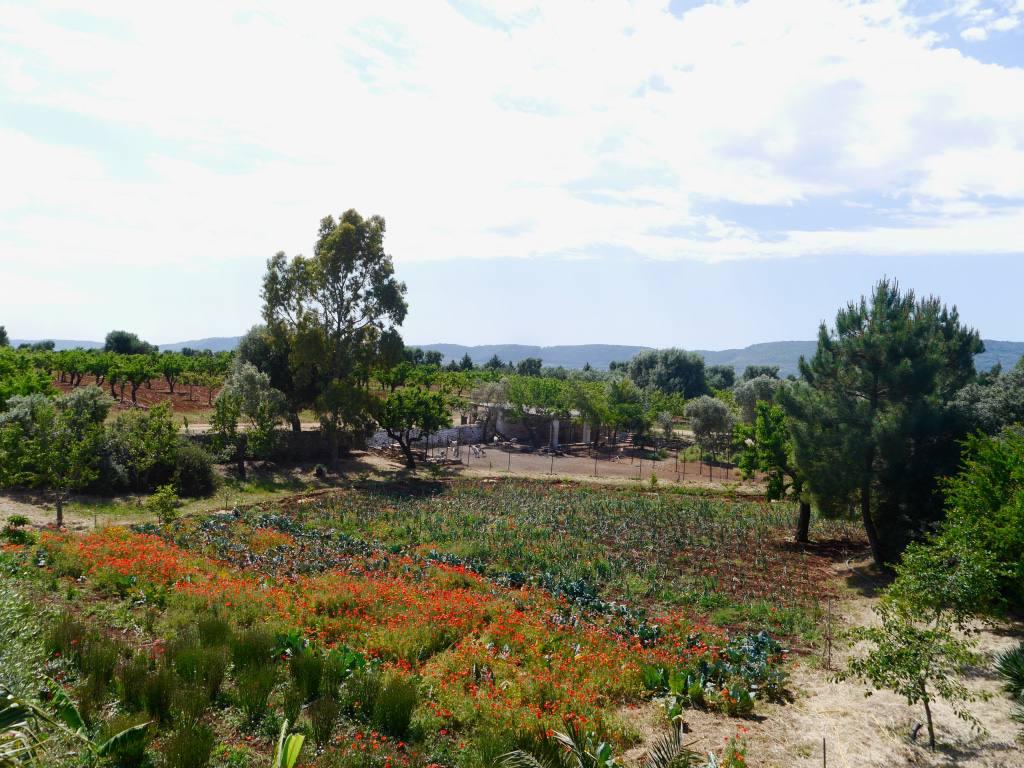 puglia-countryside