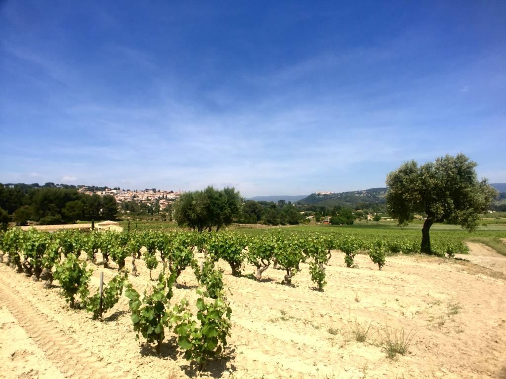domaine-de-la-garenne-vineyard
