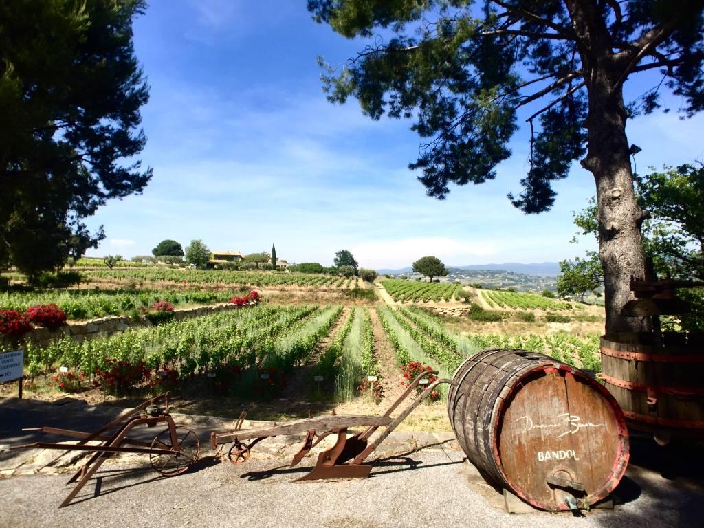 domaines-bunan-vineyard-bandol