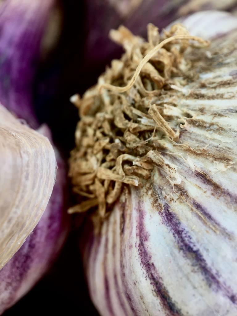 onion-pixter-macro