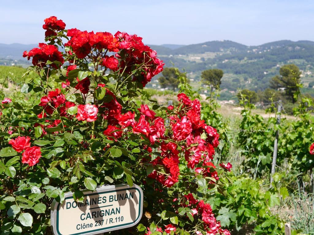 wine-tasting-bandol-france