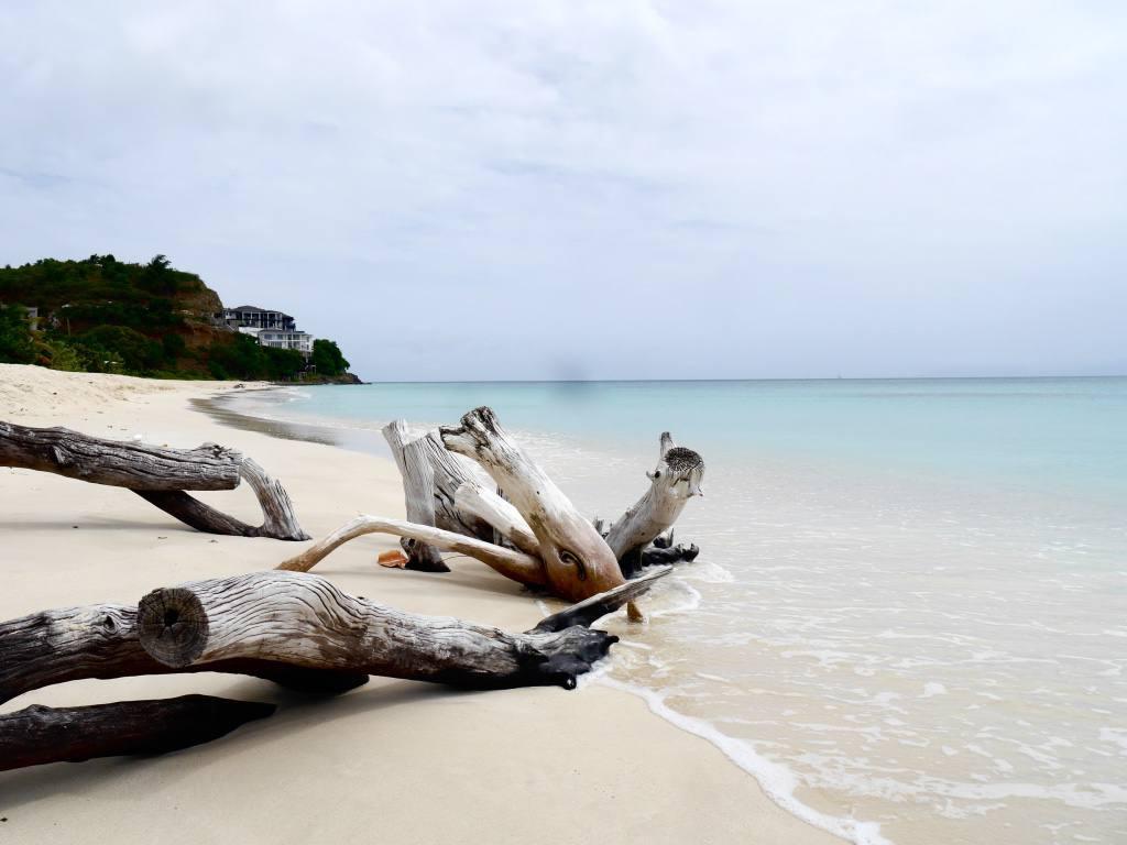 antigua-beach-driftwood