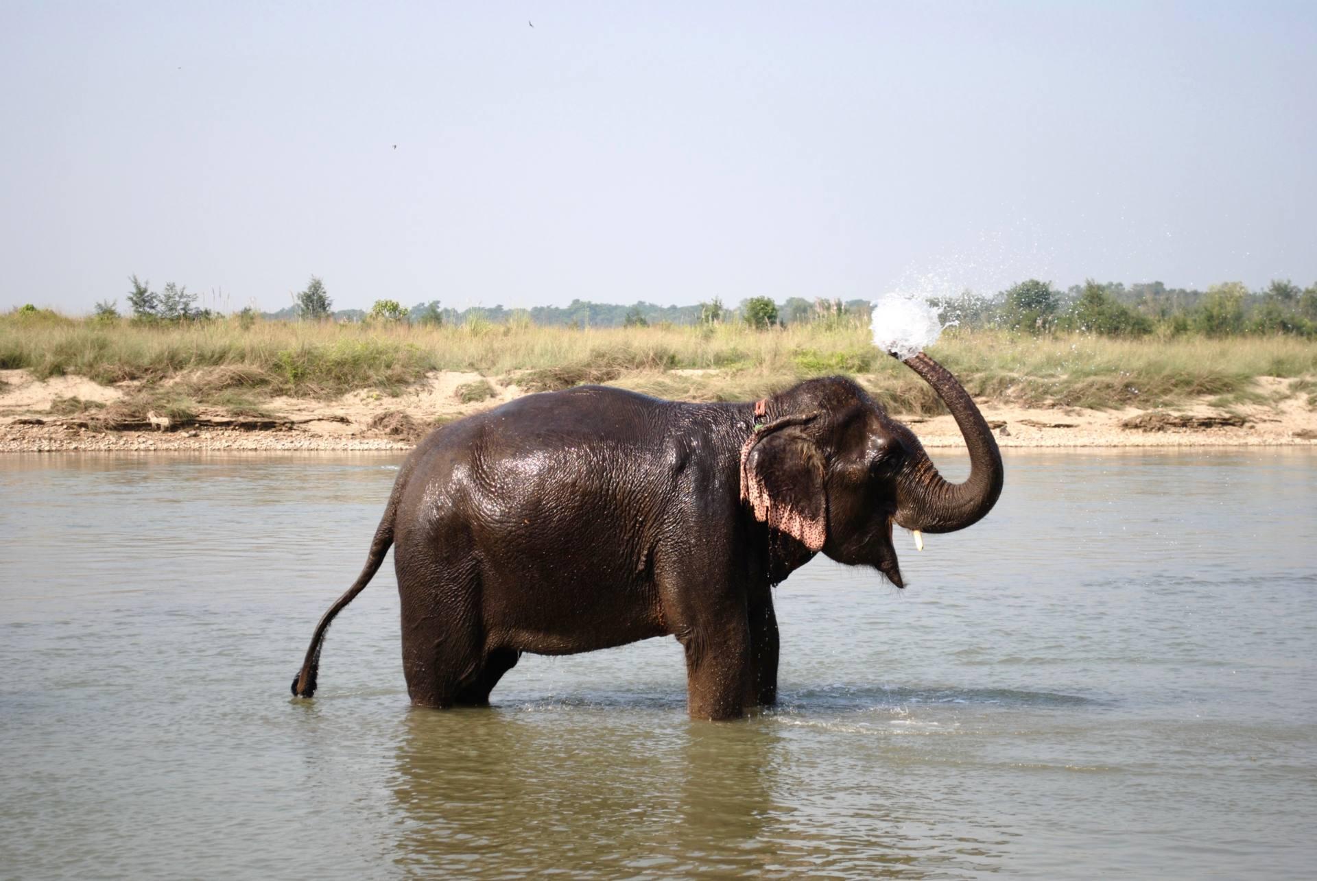 Elephant in Chitwan - 2 week Nepal Itinerary