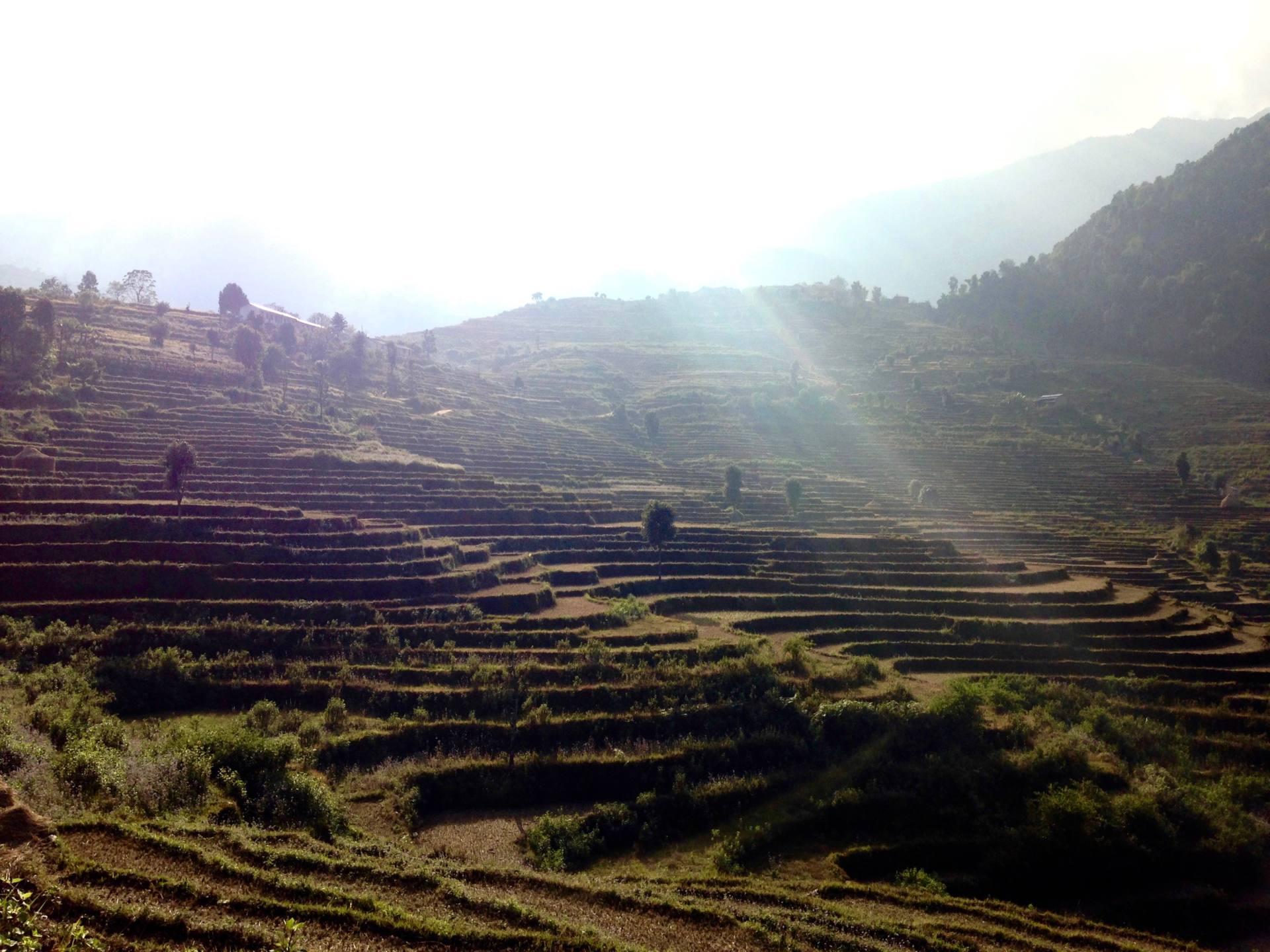 2 week Nepal Itinerary - Poonhill Trek Rice Paddies