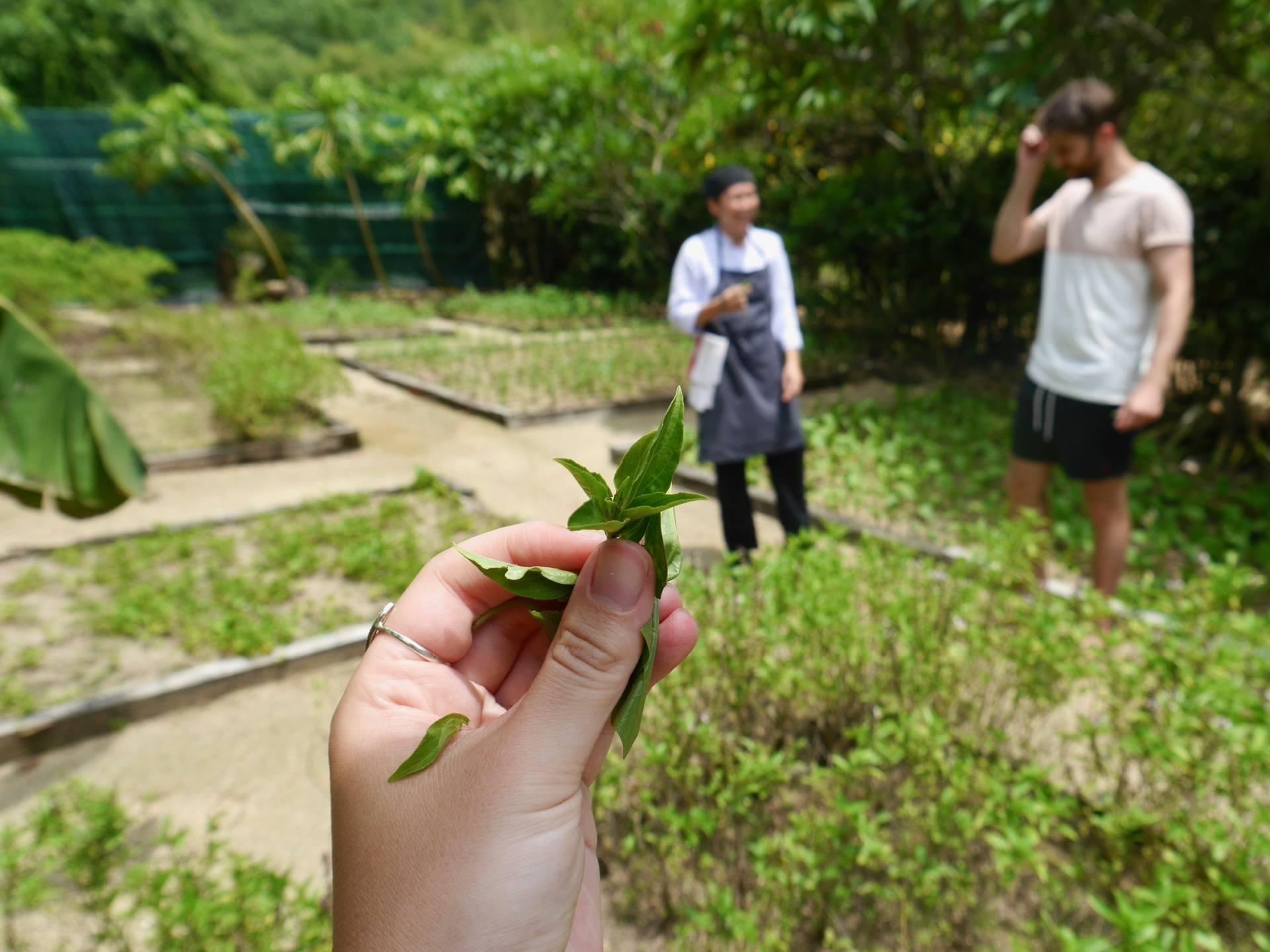 Herb Garden - Sensory Travel