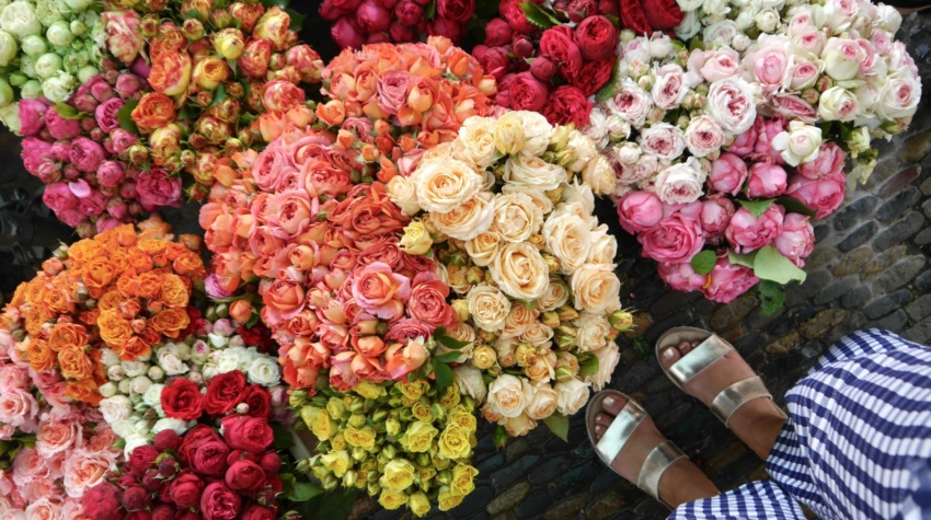 Most Instagrammable Places in Freiburg | Flower Market