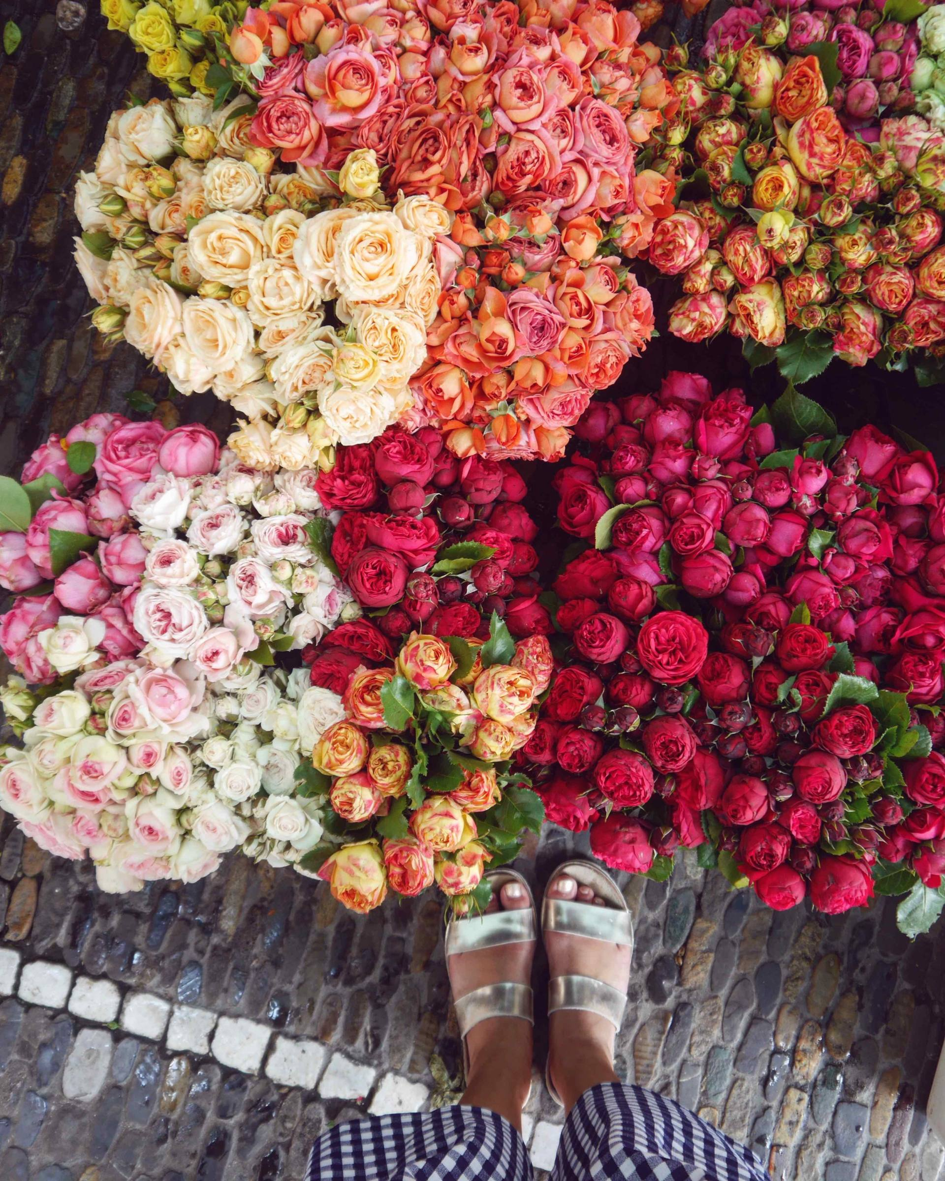 Flower Market Roses | Instagrammable Places in Freiburg