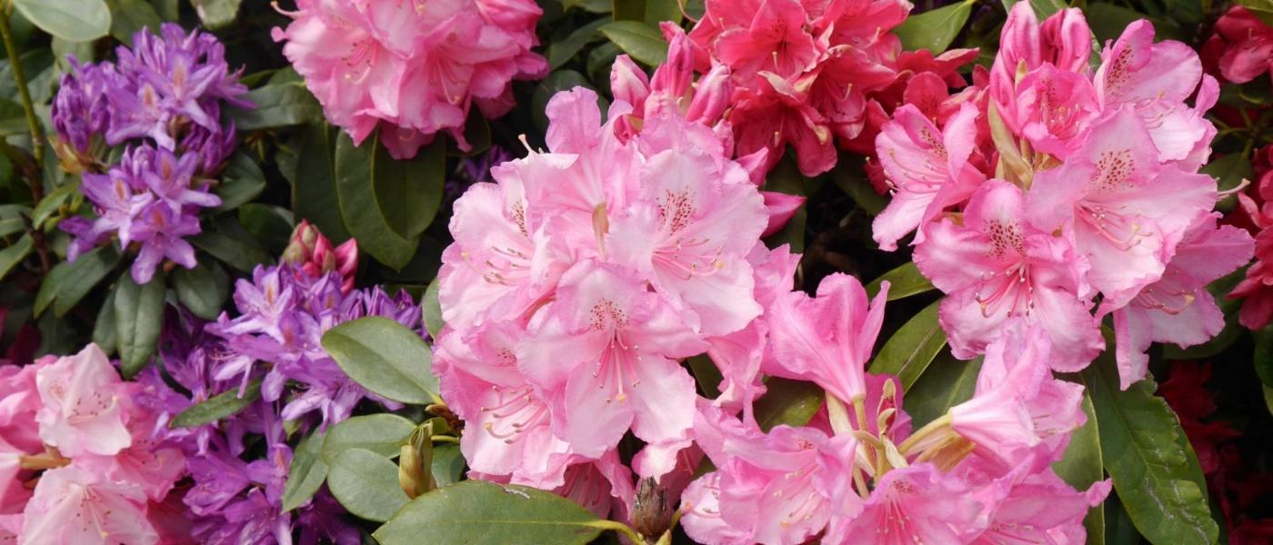 Temple Newsam in Full Bloom
